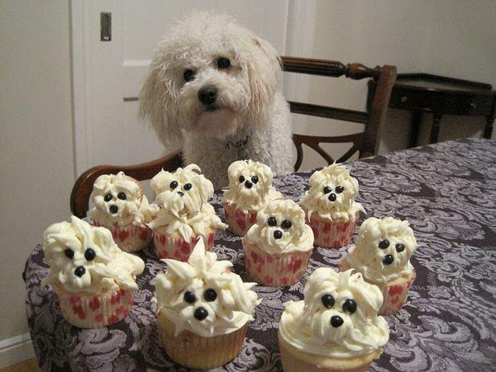 Making Cakes For Dogs