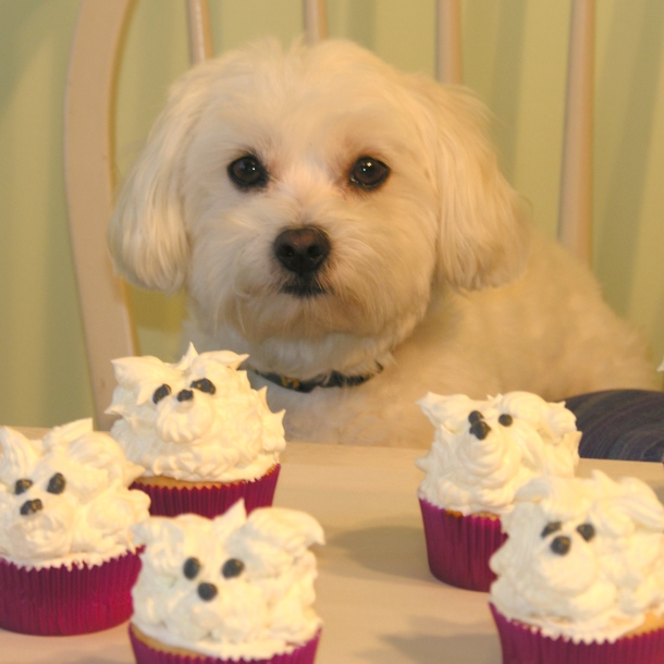 Casper and his white-dog cupcakes
