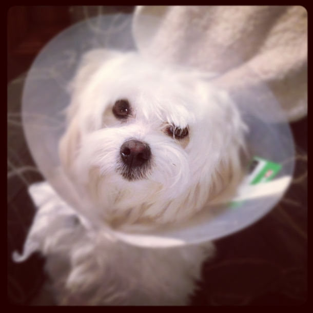 Poor Casper in his cone of shame!