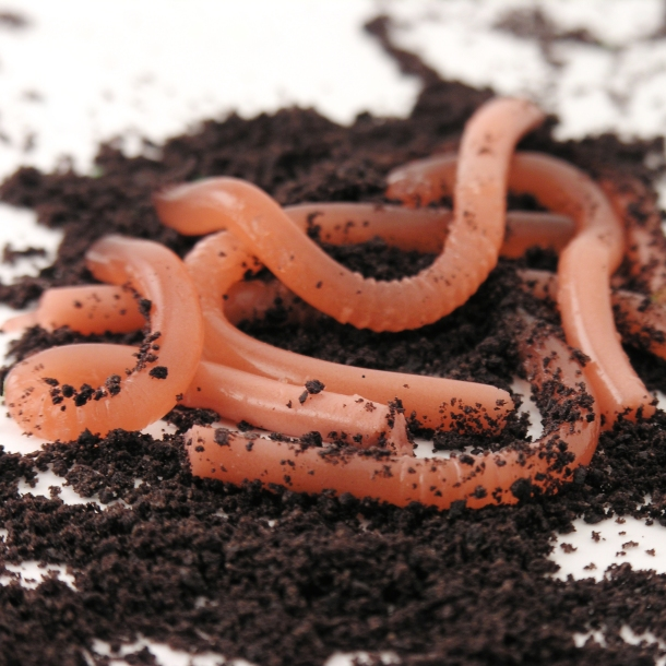 Edible gummy earthworm